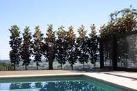 Magnolia-Trees-9